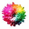 色覚多様性 (色弱/色盲/色覚異常) の見え方確認ツールまとめ